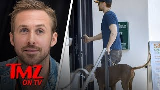 Ryan Gosling Pampers Dog at Beverly Hills Grooming Session | TMZ TV