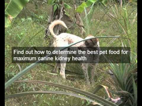 Treat juvenile kidney disease in dogs | natural dog food can reverse juvenile kidney disease in dogs