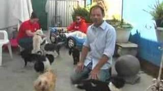 The Pet Set Boarding & Grooming, Long Beach, CA