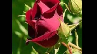Watch Lara Fabian Ici  Pour Camille  video