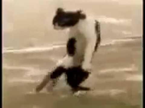 Gato Flagrado Latindo Mia Pra Disfarça Apos Saber que esta sendo filmado!