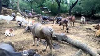 Sanju baba Bohore Village