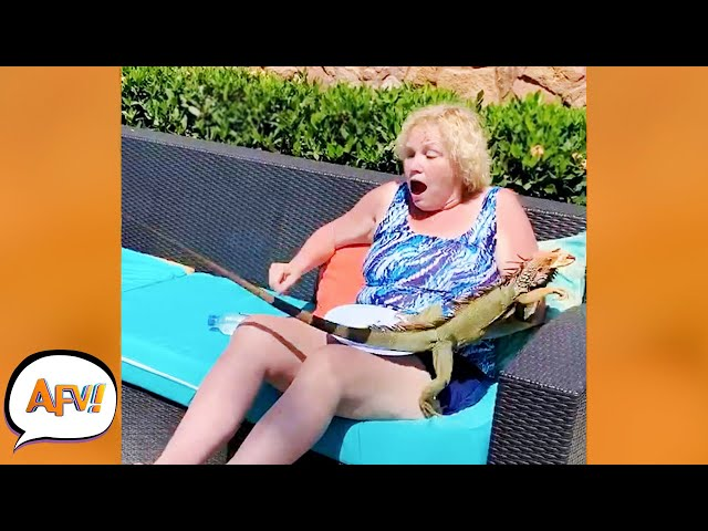 Play this video OMG! That Iguana STOLE Her PIZZA! р  Funniest Animal Attacks  AFV 2021