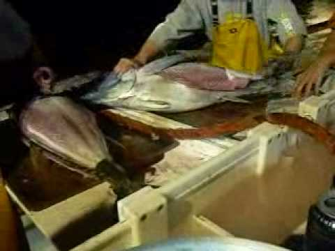 Tuna Fishing in San Diego- Cleaning the Big Ones