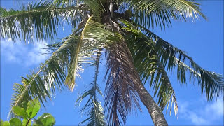 Day 17 -  Tahiti and Moorea Excursion | Emerald Princess Cruise Ship