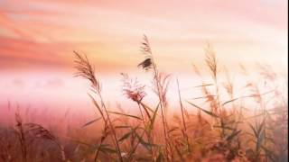 Relax TV - Best music to yoga - sleep - relaxing
