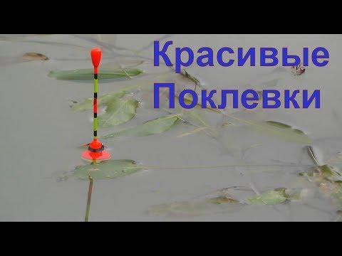 подборка КРАСИВЫХ ПОКЛЕВОК. Рыбалка, Поплавочная удочка, #Fishing, ikan, câu cá, memancing