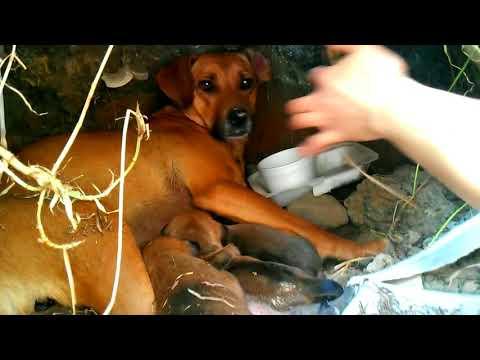 Perritos en adopción - Nacen en cueva en Bogotá