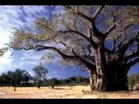 Le meraviglie della natura i luoghi pi belli del mondo for Immagini natura hd