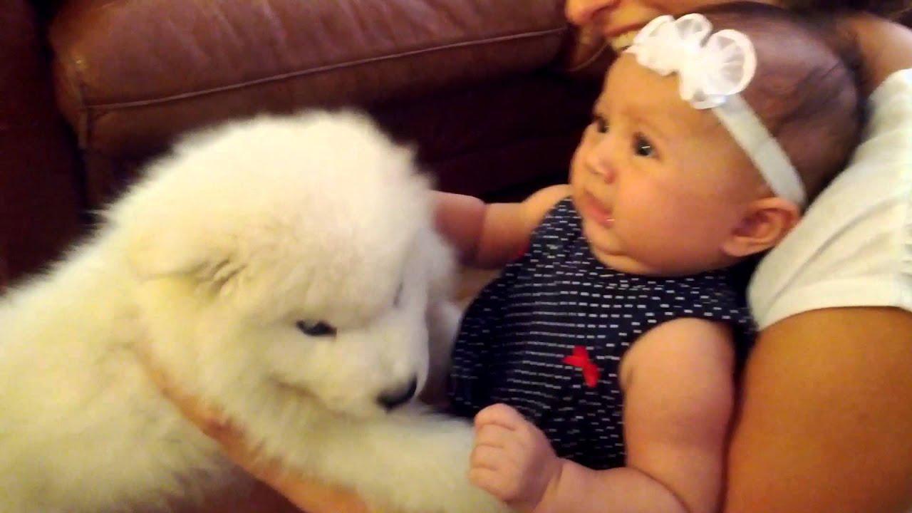 Samoyed Puppy meets Baby - YouTube