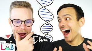 Our DNA Test Results! | The LAB