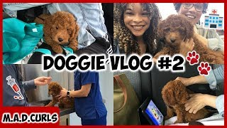 Daily Vlog #4 | Doggie's First Veterinarian Appointment. Was He A Good Boy? 🐾