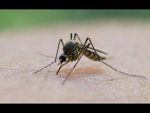 Sommer-Plage: Die Mücken kommen