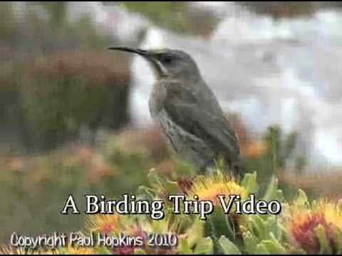 South Africa 2010 Birding Trip DVD Trailer