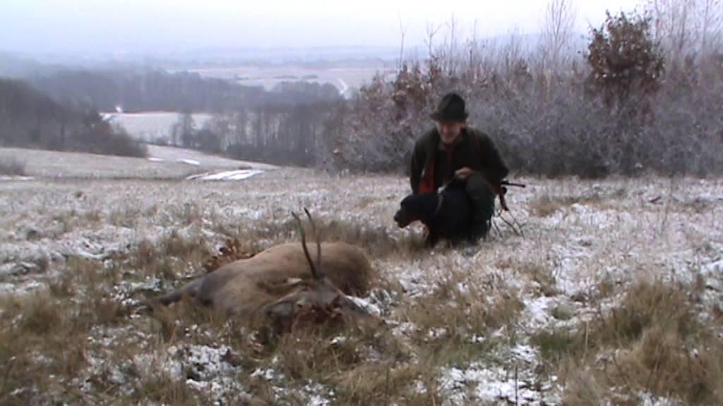 Spr�vanie sa kopova pri ulovenej jelenej zveri - YouTube