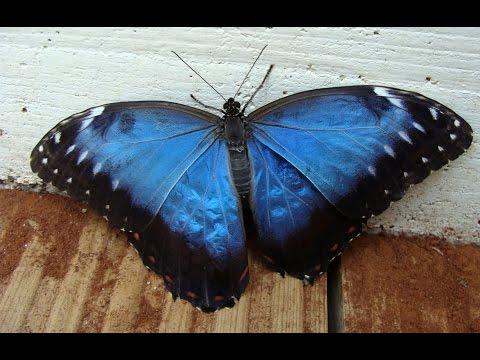 O borbolet�rio tropical de Santa Margarida. / La serre aux papillons tropicaux de Santa Margarida.
