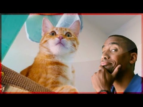 Cat Gym Paradise | Animal Cribs | Heavy Petting Originals