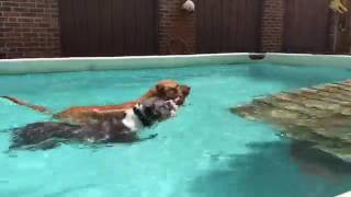 Training | CHEWY SWIMS | Solid K9 Training Dog Training