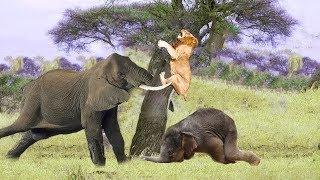Epic Battle Mother Elephant vs Lion - Elephant Protect Calf From Pride Lion