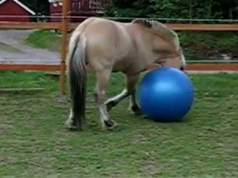 Funny horse video, Ashley Uhrebro