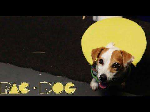 ゲームの世界をリアルに再現!パックマンに扮する犬がめちゃ可愛い!