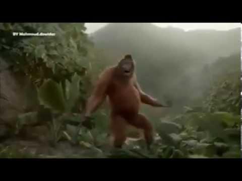 download lagu Goyang Dumang Versi Orangutan gratis