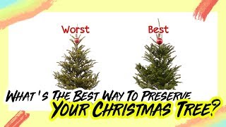 What's The Best Way To Preserve Your Christmas Tree?