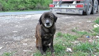 Saving This Homeless Dog Just Before A Rainstorm