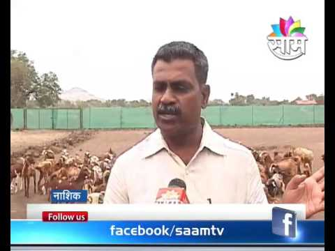 Goat farming is seen as side business in Nashik