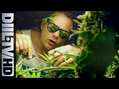 Hemp Gru - Mary Mary Feat. Ras Luta, Siostra Mariola (diil.tv Hd) video