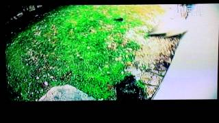 King on Animal Planet's Swamp Wars. Pit Bull Vs. Python reenactment