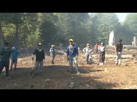Comunidades Mapuche combaten incendio en Quinquén