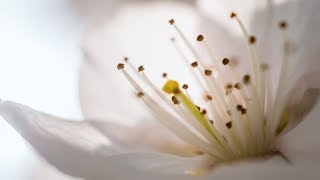 Morning Relaxing Music - Beautiful Piano Music For Stress Relief, Study Music (Donna)