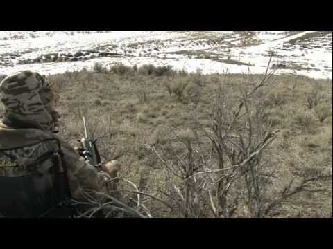 Coyote comes to the FOXPRO in seconds!