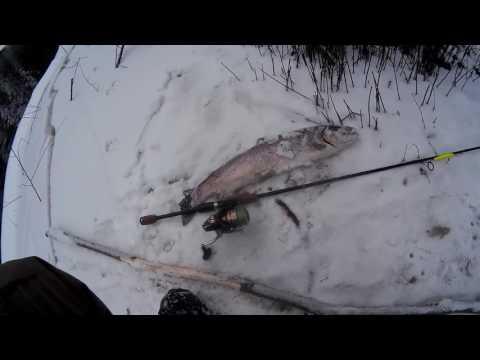 ловля форели в ленинградской области видео