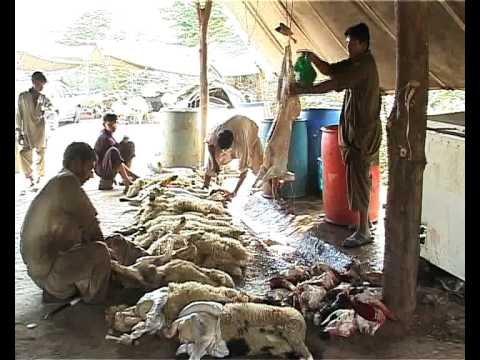 Pakistan Illicit Meat Trade 2009 Addiel Sabir Youtube