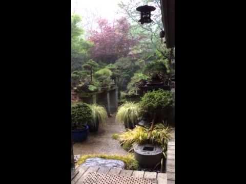 Bonsai garden in an April shower 2014