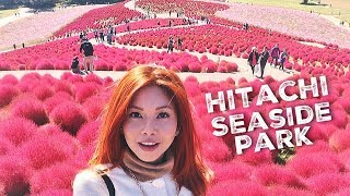 Hitachi Seaside Park in Autumn | JAPAN | BiancaValerio.com | Come Away With Me by Bianca Valerio