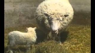 GCSE Science Revision - Cloning Dolly The Sheep