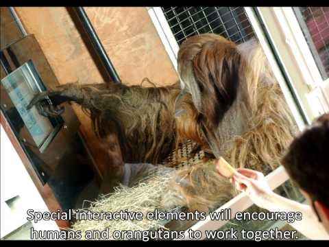Indianapolis Zoo - Making a Difference for Orangutans