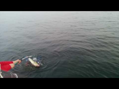 кого ловят в заливе в июне
