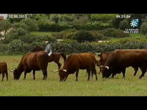 Raza retinta. Tierra y Mar nº 964 Emisión  12-05-2013