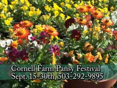 Pansy Festival