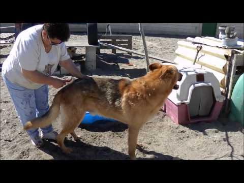 Animalinneed: Yaco