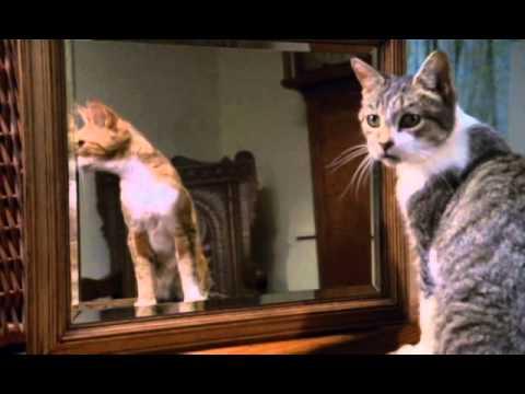 La guía de los gatos (Discovery Channel)