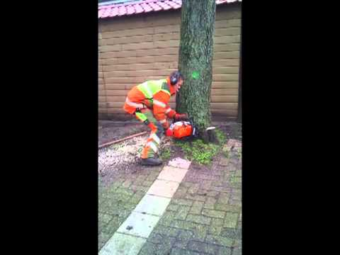 Stihl MS 261 and a Stihl MS 441 in action.