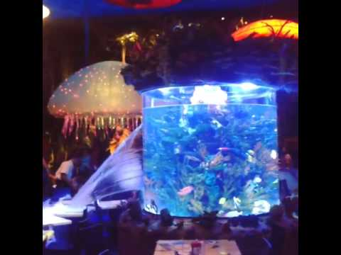 Fish tank springs a leak at t rex cafe youtube for How to fix a leaking fish tank