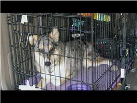 0 Dog Training Tips : Dog Crate Training