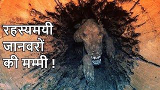 रहस्यमयी जानवरों की मम्मी   Shocking Animal Mummies   In Hindi