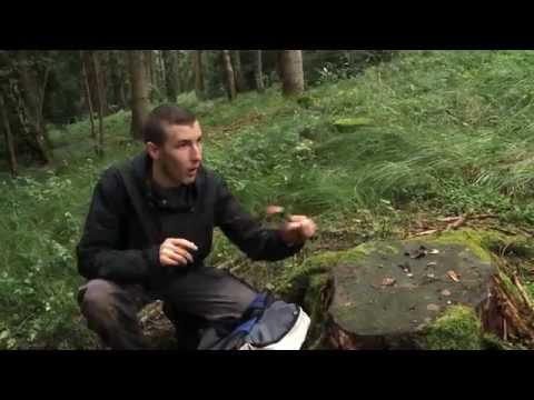 Lad vs. Wild: Beaver Grills (Parodie)